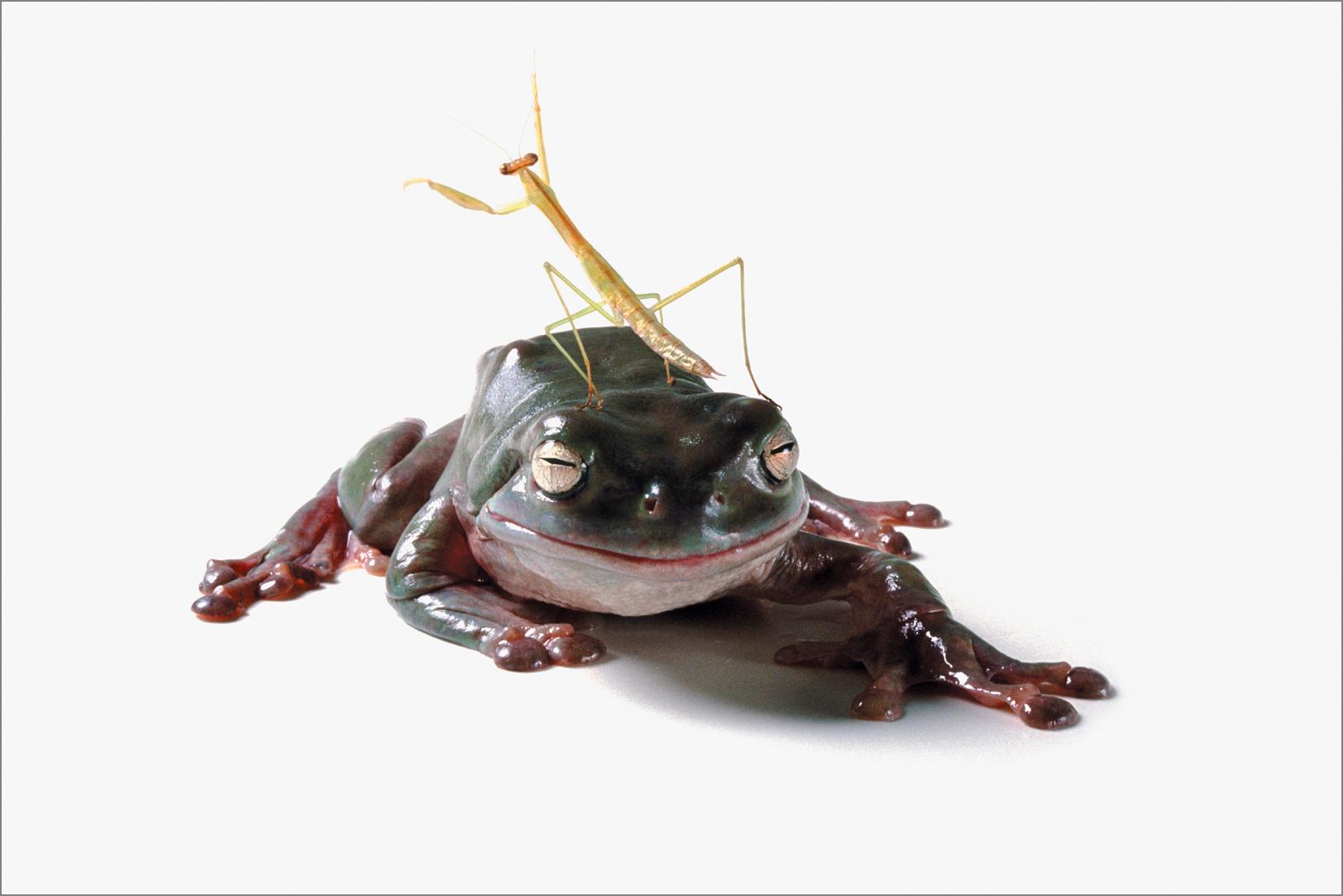 fc_frog5_4g.jpg