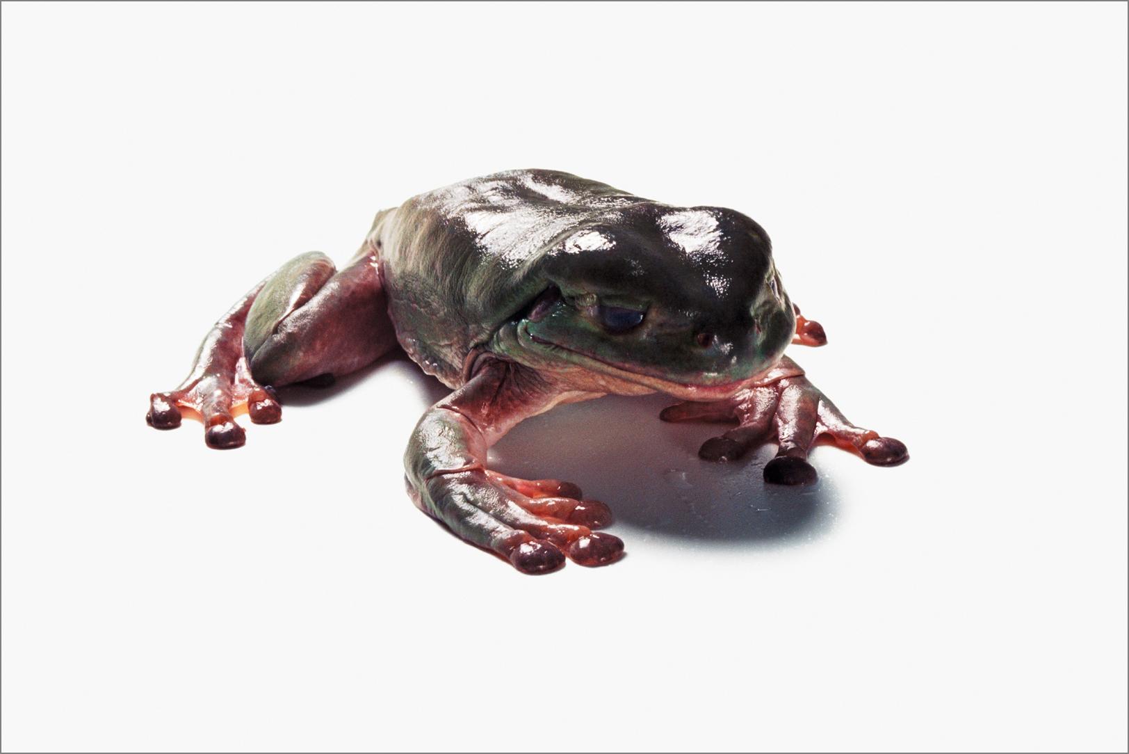 fc_frog8_4g.jpg