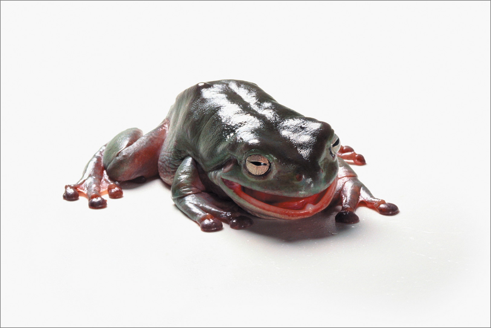 fc_frog9_4g.jpg