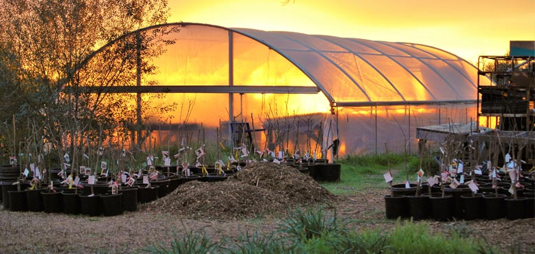 greenhousesunset_rle318.jpg