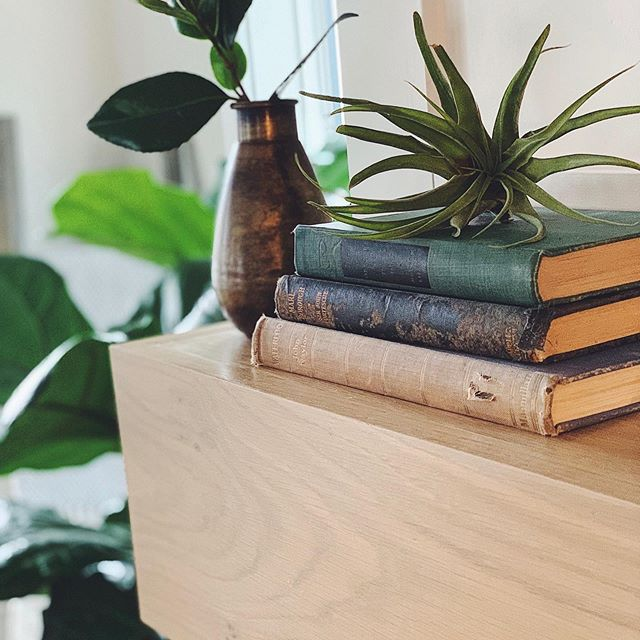 BOOKS & PLANTS 🌱  PLANTS & BOOKS 📖 ...repeat.😍 In case you haven't noticed, these are our must-haves for warming up any space! The older the book, the better. 👌🏼 Our only rule is we have to read every book before using it as an accessory. Just kidding, I've never read any of them. What are yoouur must-haves? . . . . .  #wildcatinterior #howyouhome #vignette #homestaging #howwedwell #relaxing #homedecor #interiorstylists #interiordecorating #greenery #apartmenttherapy #housetour #naturelovers #naturallight #earthinspiredhome #interiorstaging #interiorlovers #interior123 #nashvillestaging #magnoliahome #dreamhome #interiordecorators #nashville #realestate #nashvillerealty #housebeautiful #transformation #thedecorsocial