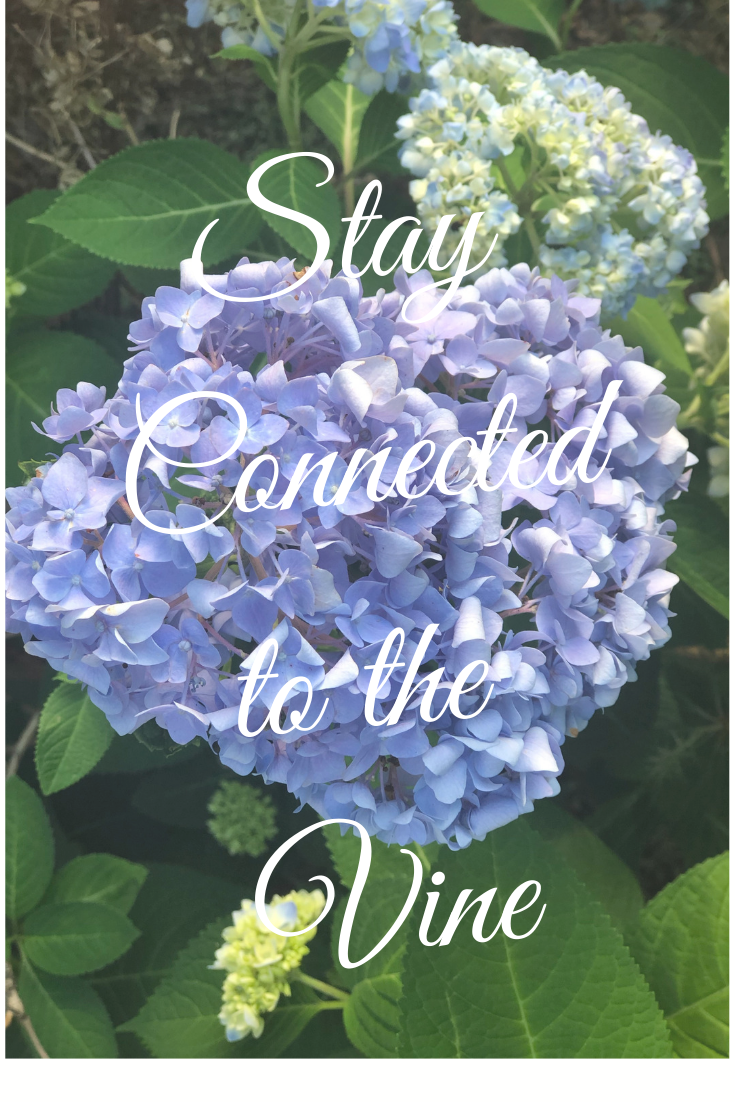 Stay Connected to the Vine.png