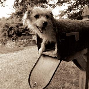 dog_inside_mailbox.jpg