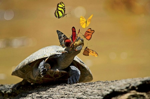 turtle butterflies.jpg