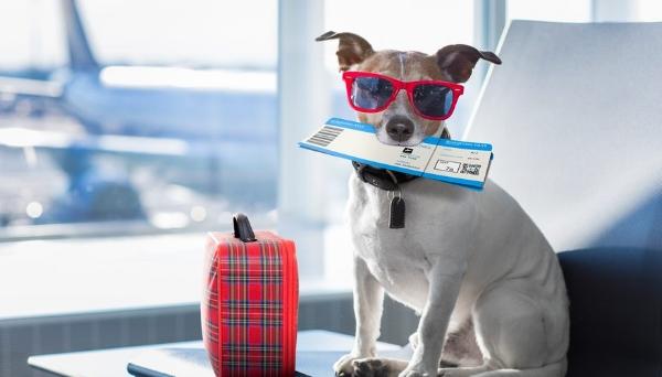 dog_travel.jpg