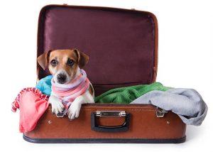 dog_travel2.jpg