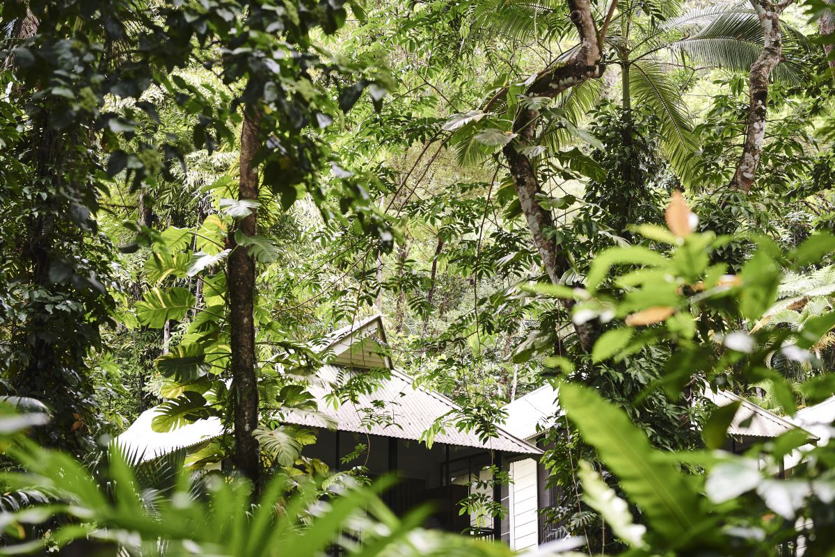 Daintree Ecolodge stay in the rainforest
