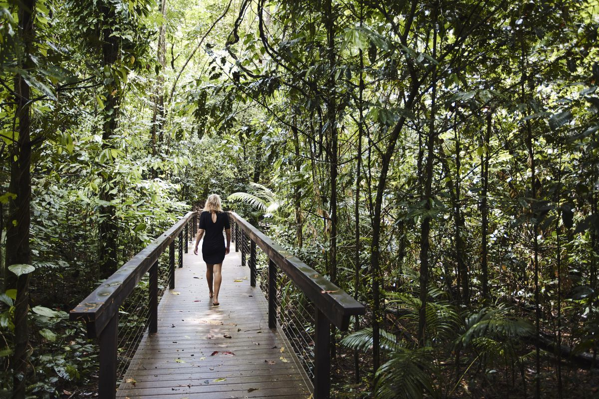 Daintree Ecolodge boardwalk protect the forest floor