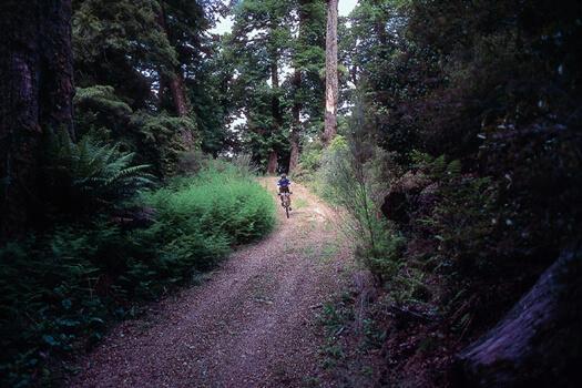 Mountain biking, Poronui