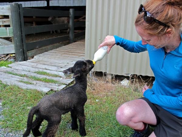 Wilderness Lodge Arthurs Pass farm tours NZ