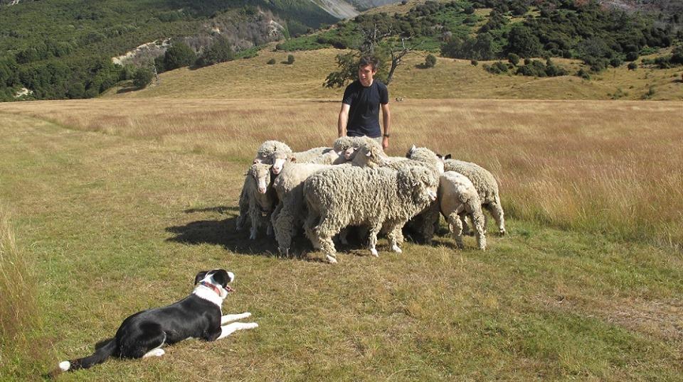 Wilderness Lodge Arthurs Pass farm activities