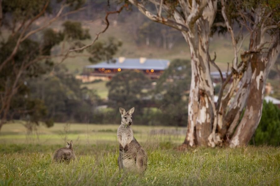 Wolgan Valley Wildlife Tours