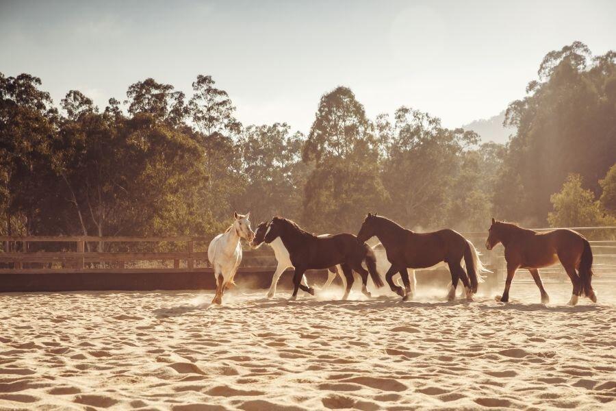 Wolgan Valley Horse riding