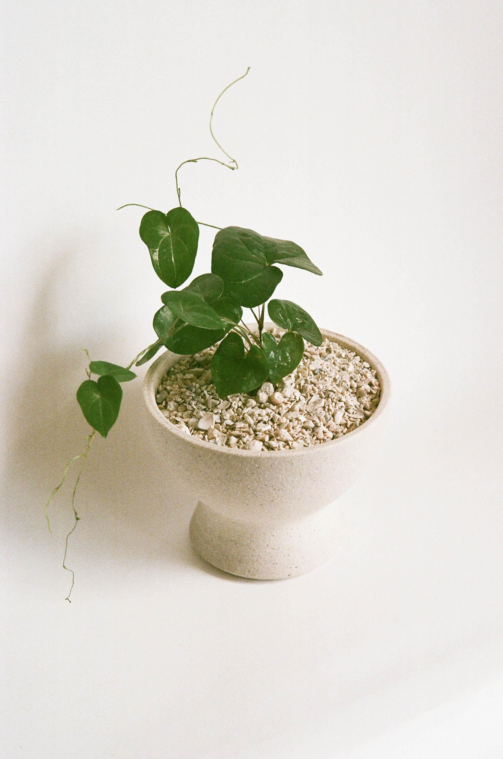 kb-film-planter-moon-1.jpg