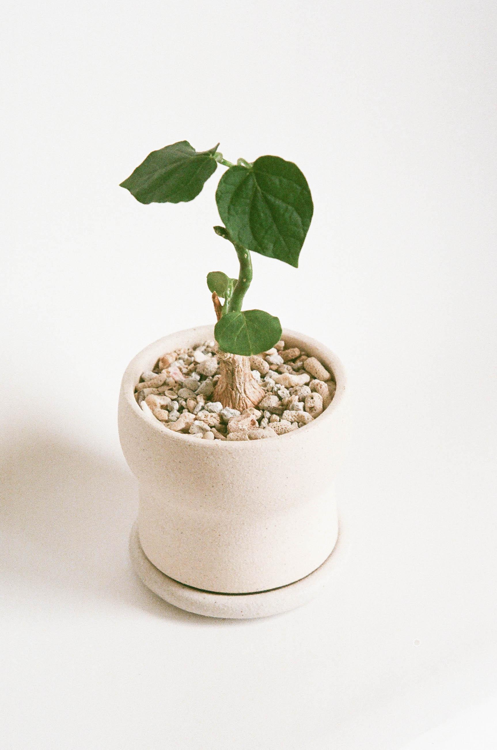 kb-film-planter-moon-4.jpg