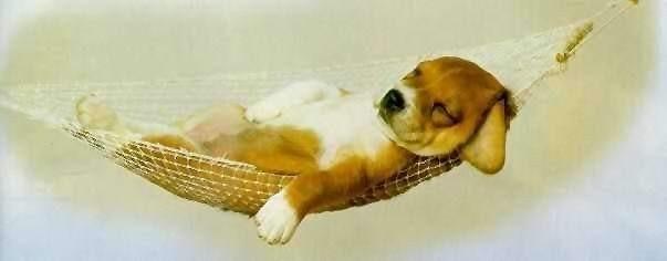 dog-in-hammock.jpg