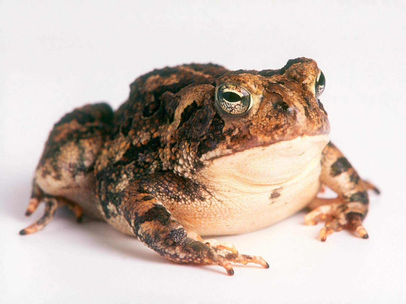 Toad-1-NYJNHB3DI1-1600x1200