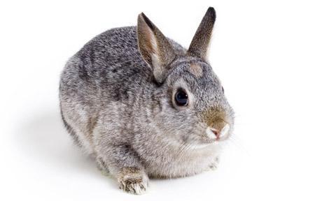 rabbit_1682758c