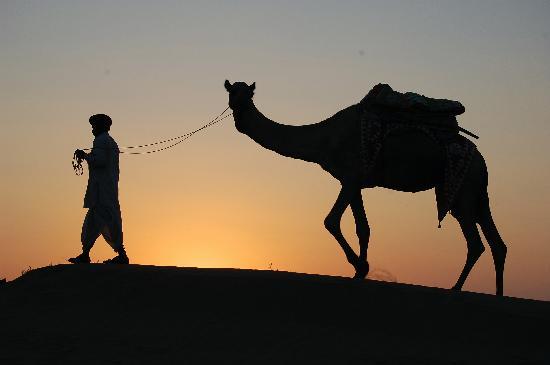 jamba-sunset-camel.jpg