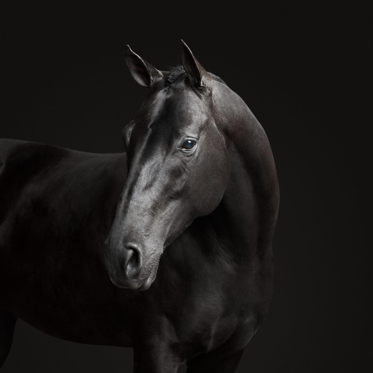 Black Horse No 1 Randal Ford