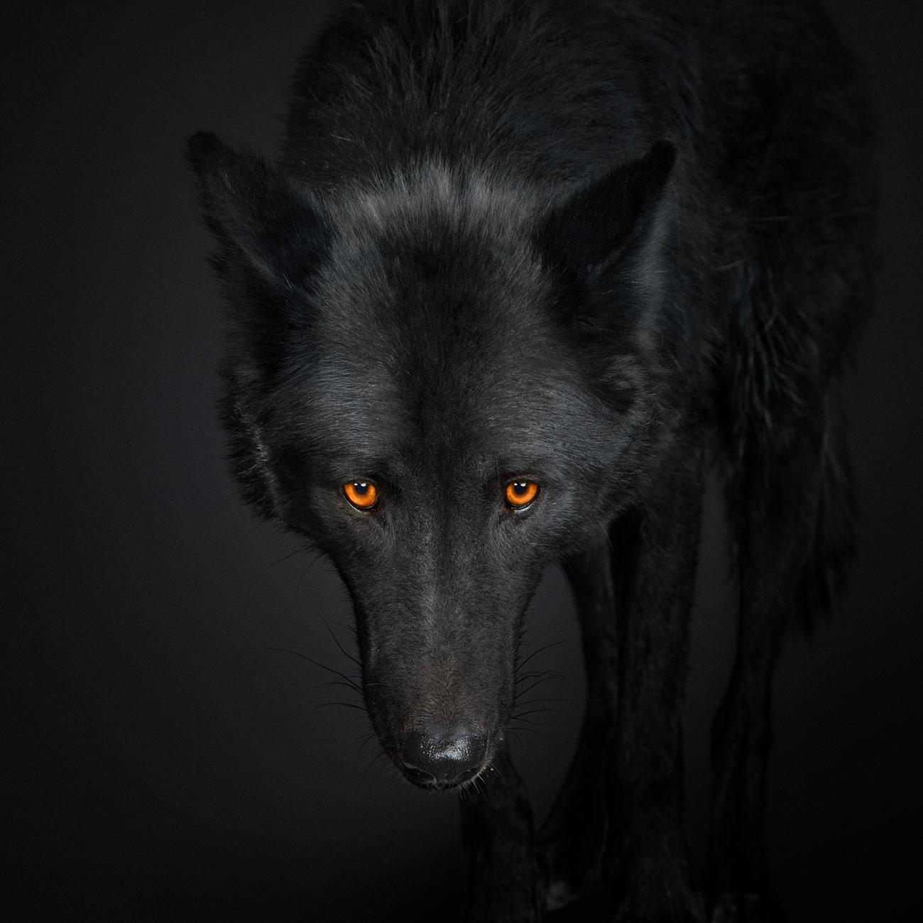 black wolf no 1 randal ford randal ford
