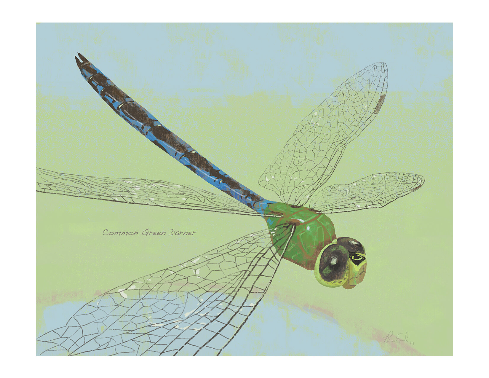 Common Green Darner list.jpg