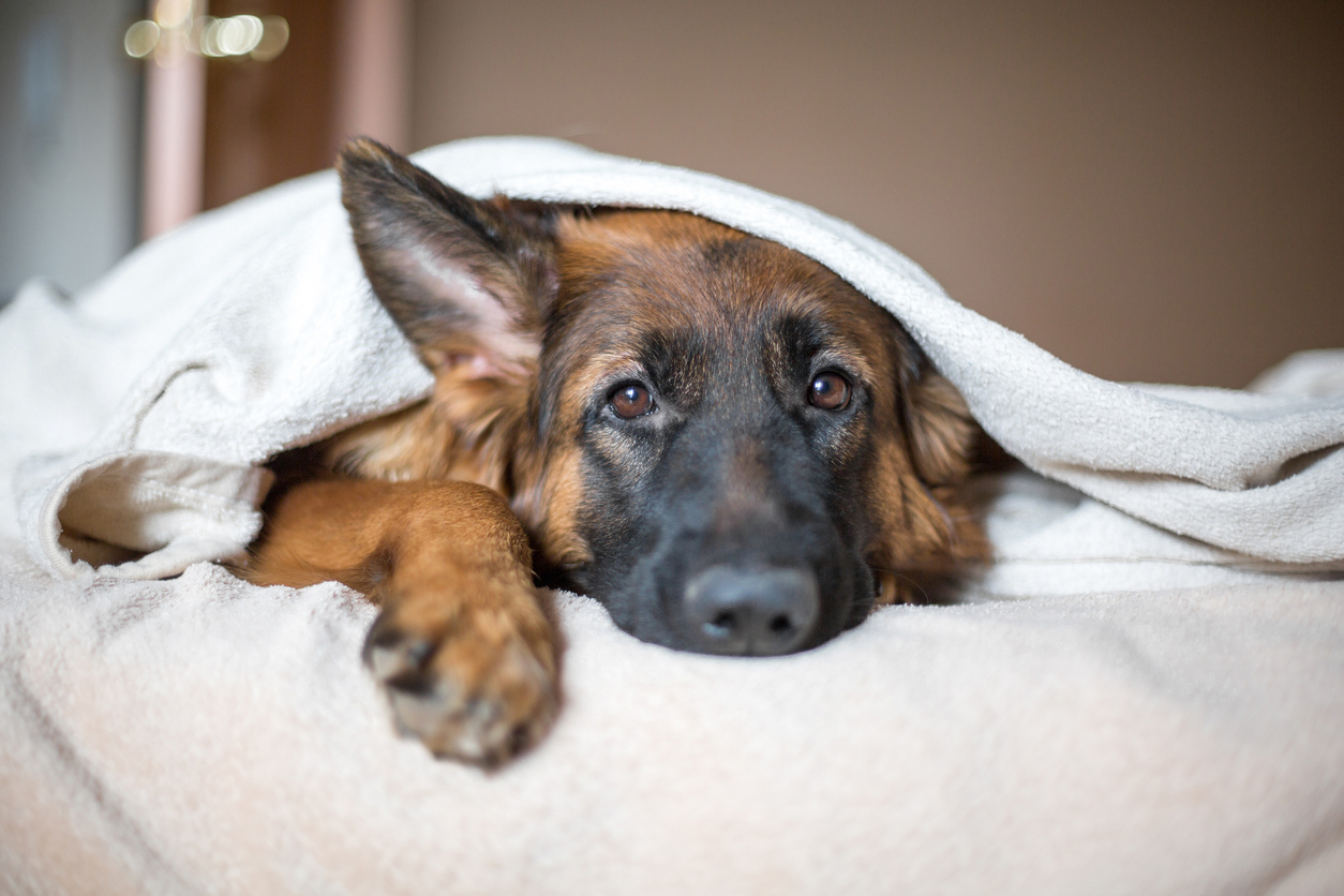 Dog Blog 8.jpg