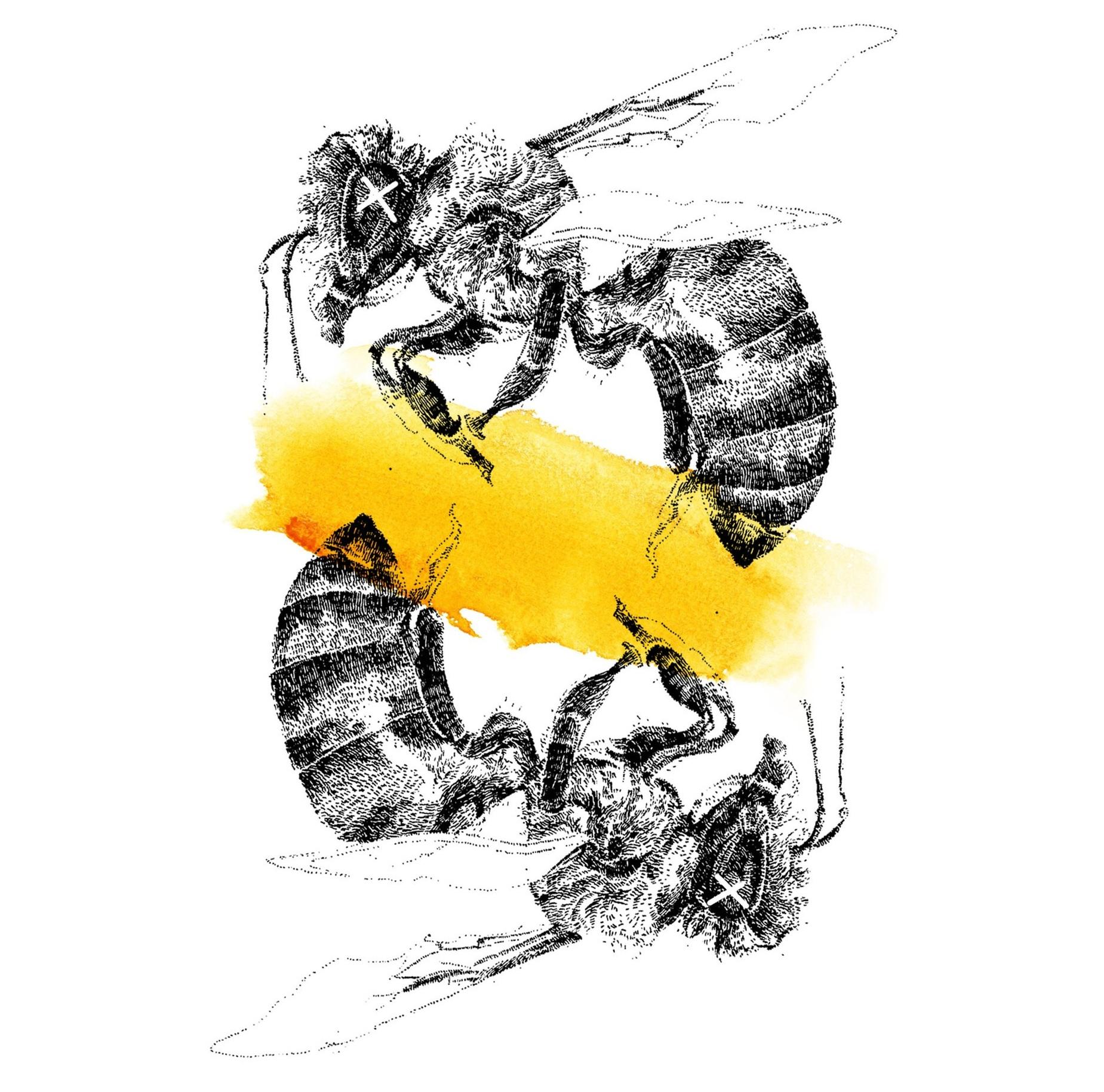 BeeBee.jpg
