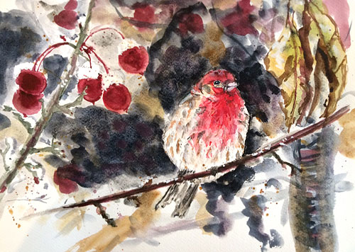 House-finch-and-crabapples.jpg