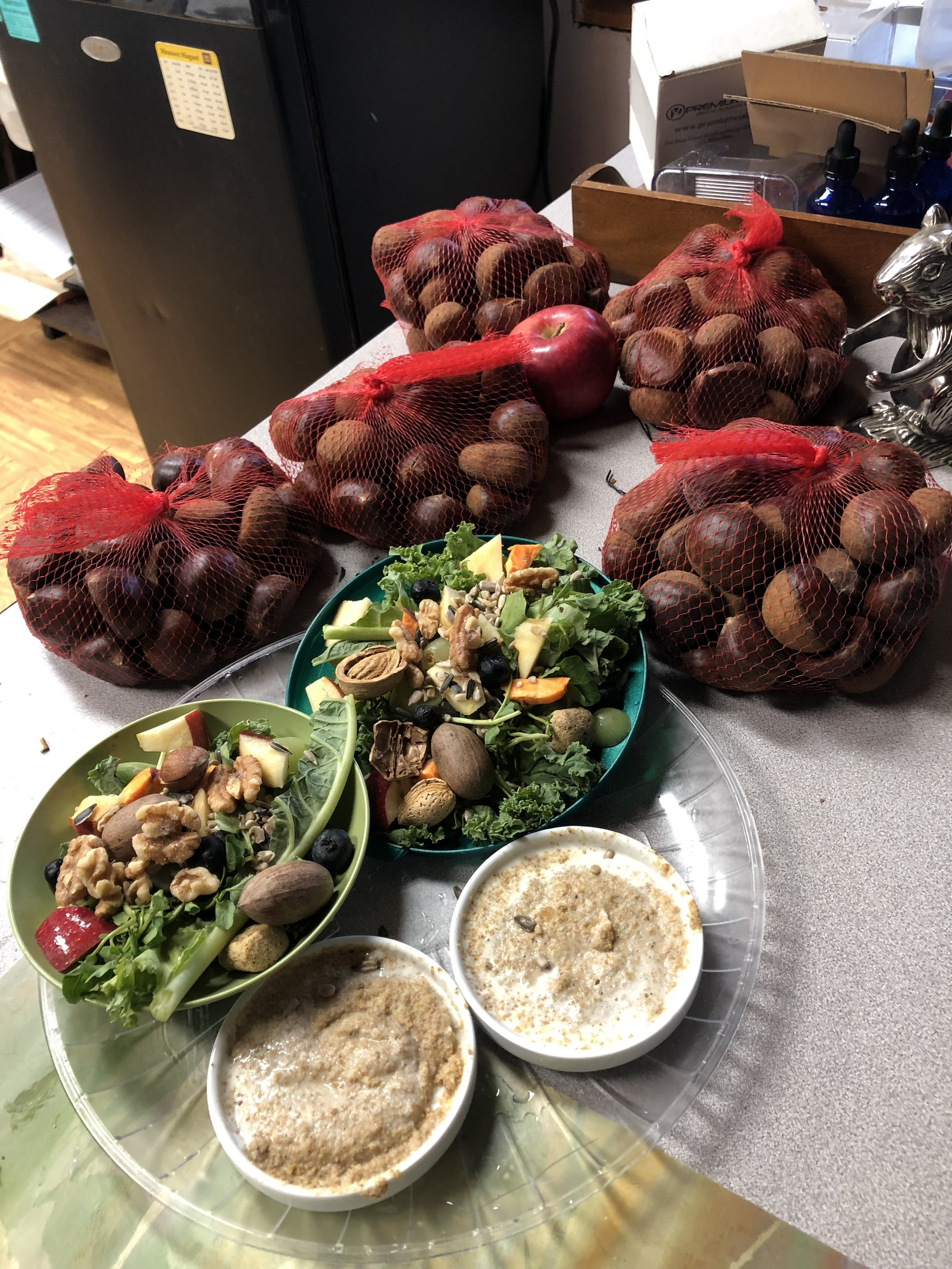 Breakfast for growing eastern grey squirrels. With a devastating acorn drought this year in the state, I needed to purchase chestnuts, walnuts and hazelnuts to teach squirrels how to crack shells, a necessity before release.