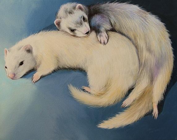 Spooning Ferrets.jpg