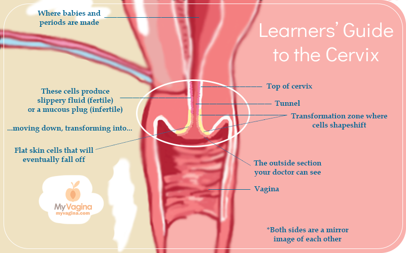 Learn more about your wondrous female anatomy at myvagina.com. Photo source:  here .