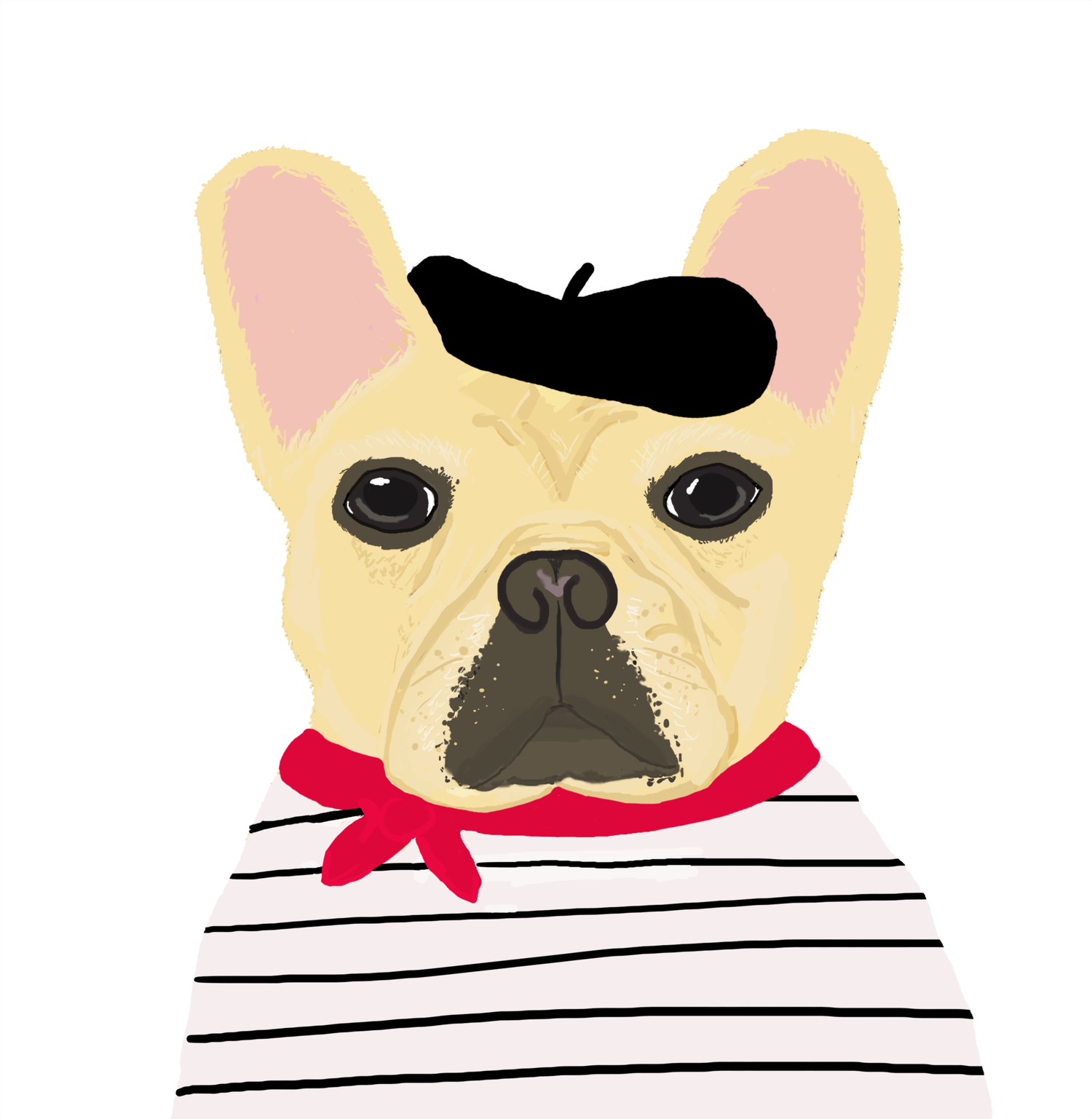 Pet Illustrations -