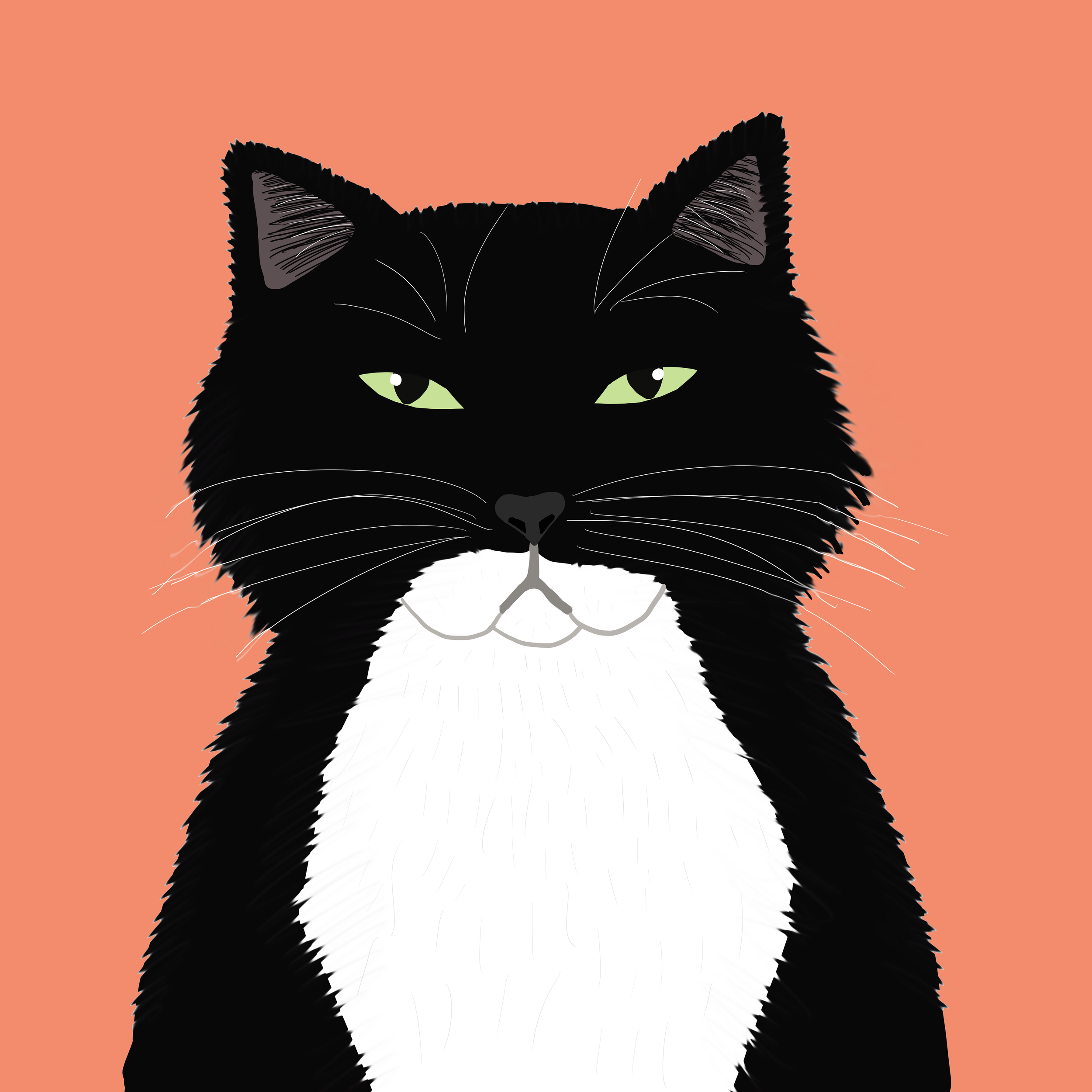 catcolor (2).png