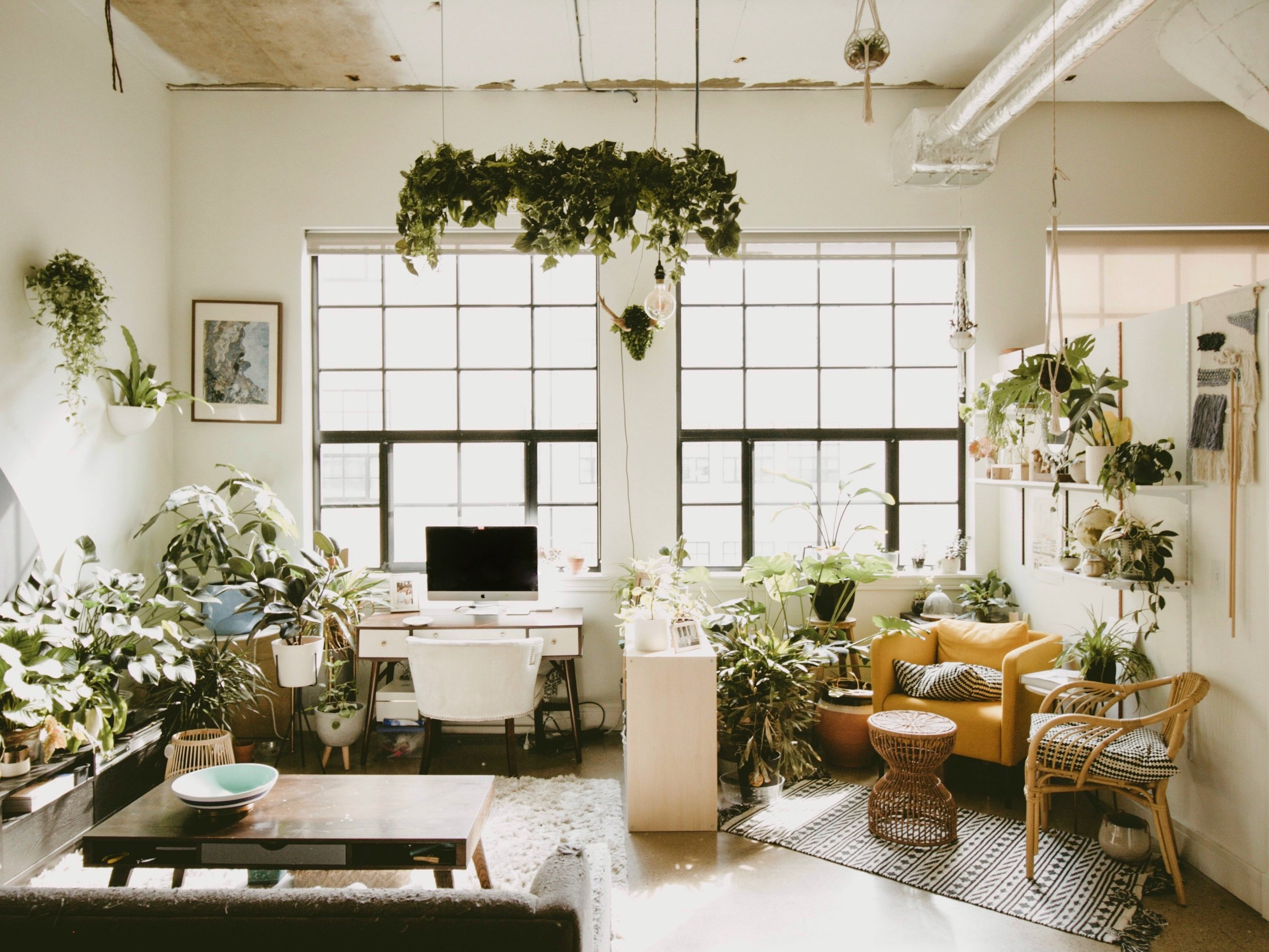 """""""These """"Serial Renters"""" Outfitted Their Ivy City Apartment With Tons of Houseplants and a DIY Accent Wall"""" -"""