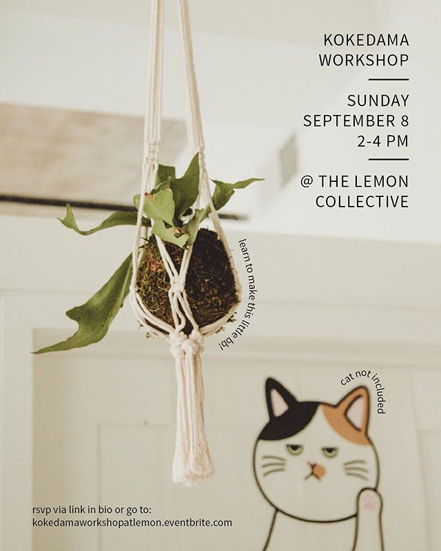 ✖️ Workshop Alert ✖️ I'll be hosting another kokedama workshop on Sunday, September 8 at @thelemoncollective! Kokedamas are one of the easiest plants to take care of 🙂 Seriously, no prior experience necessary! RSVP via link in bio :)