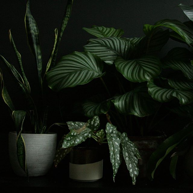 Plants can be sinister too 😈 Remember when you used to run around the woods after school until dark? Do kids still do that? Stranger things might have ruined it for me. Also, it's 2019, and things got weird. Anyway, what I was trying to say is— plants don't have to compromise your moody and dark aesthetic. I love styling plants by their textural qualities 🙃