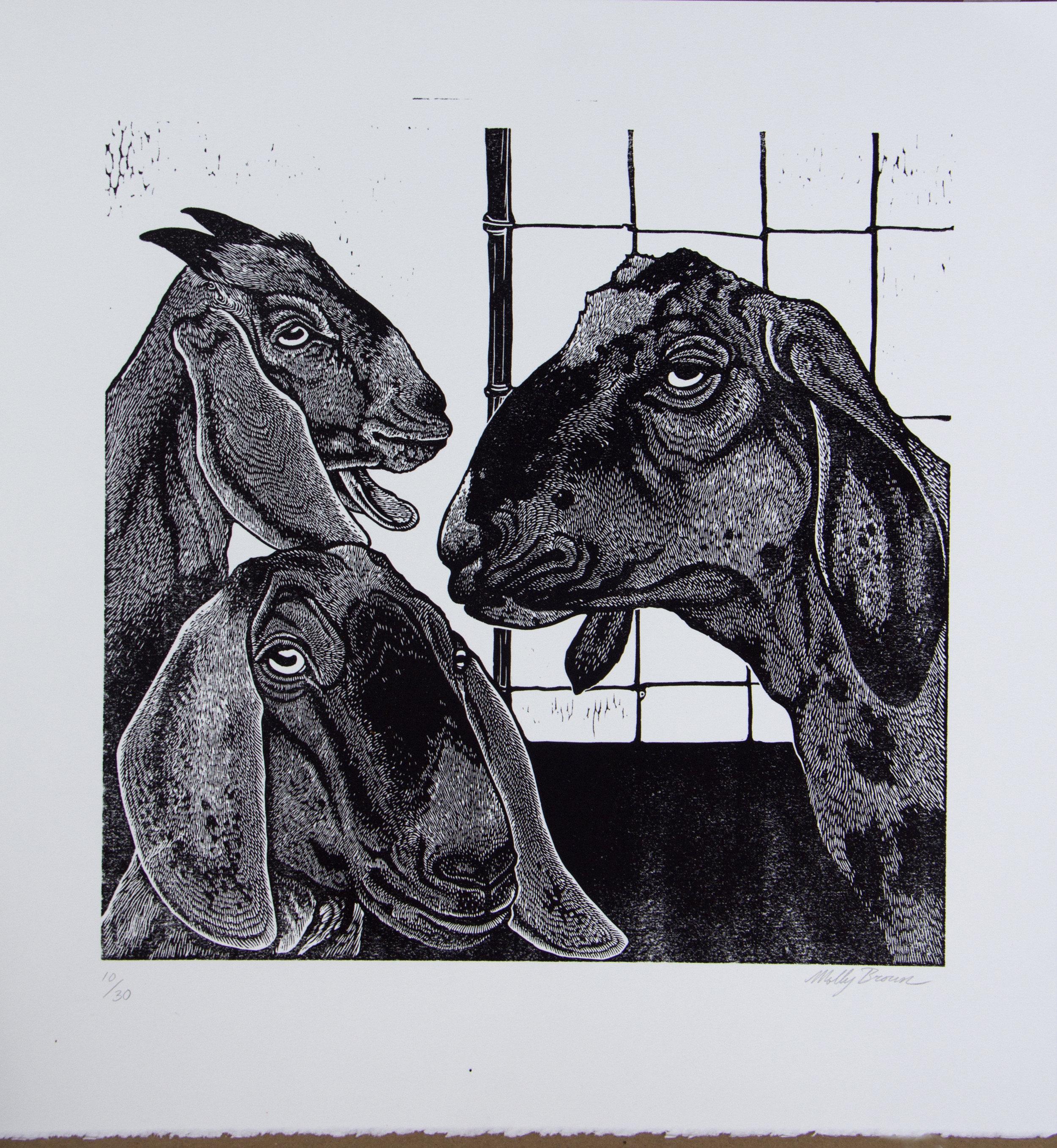 goats (1).jpg
