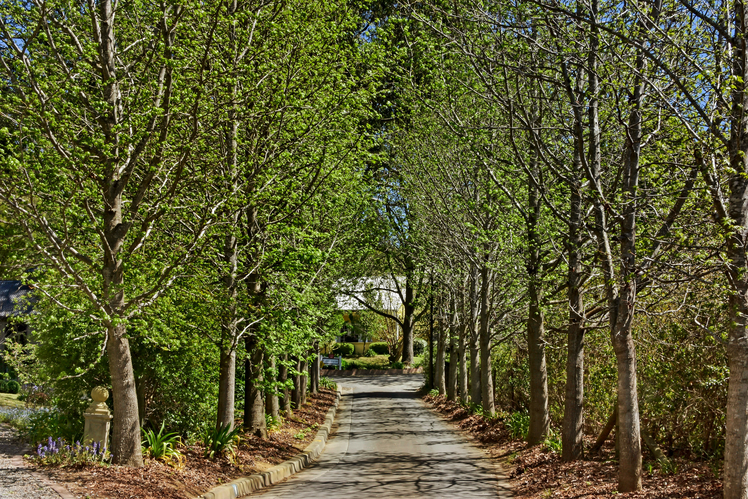 ARRIVE VIA OUR AVENUE OF TREES