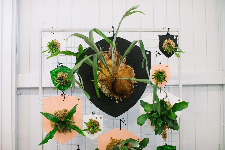 plantmarketDEC18-0035_LR.jpg