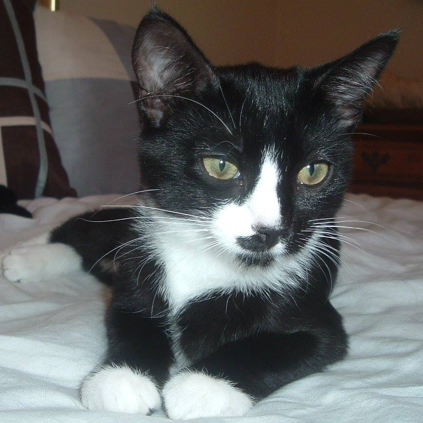Star   Tuxedo female - DOB 3/25/28  Star light Star bright, Star wishes most for her and her sister Snow to find their forever home soon. Star loves to play games with her sister Snow and is friendly and full of love.