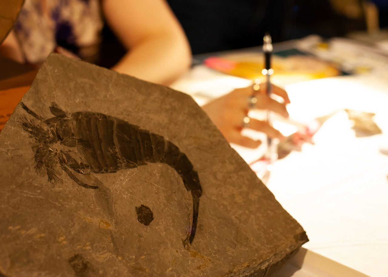 A Museum's Treasured Tradition of Identifying Fossils