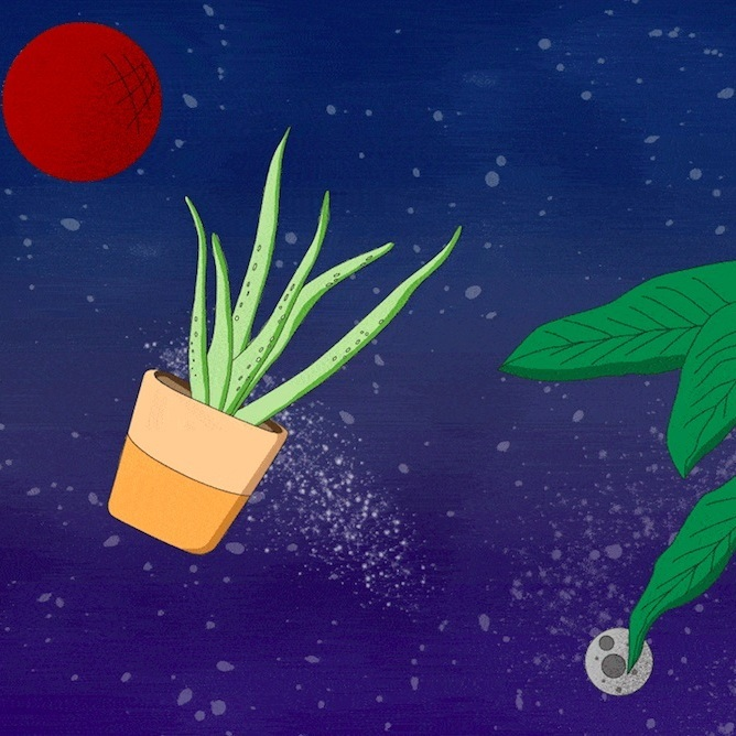 Which Houseplants Should We Bring to Space?