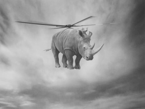 Rhinocopter - Beata Bieniak
