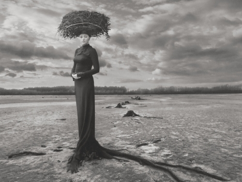 Empty Nest - Dariusz Klimczak