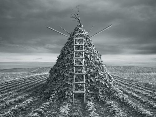 Pyramida - Dariusz Klimczak