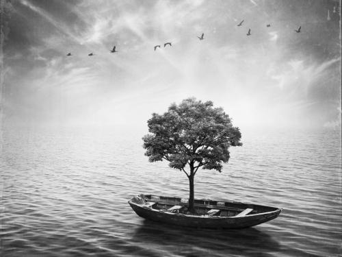 Tranquility - Sarolta Bán