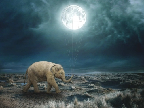 Elephant Moon - Beata Bieniak