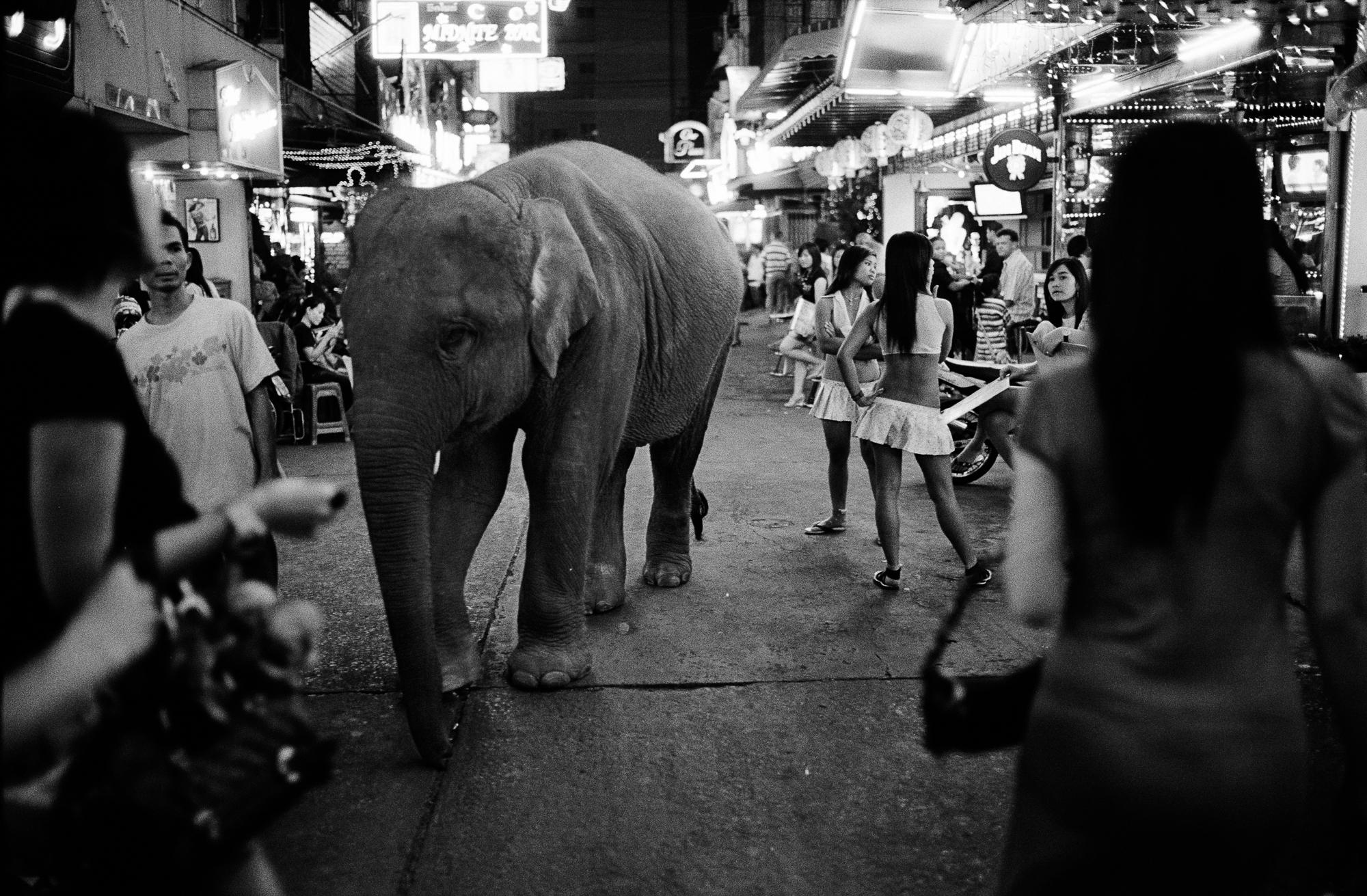 Bangkok Elephant.jpeg