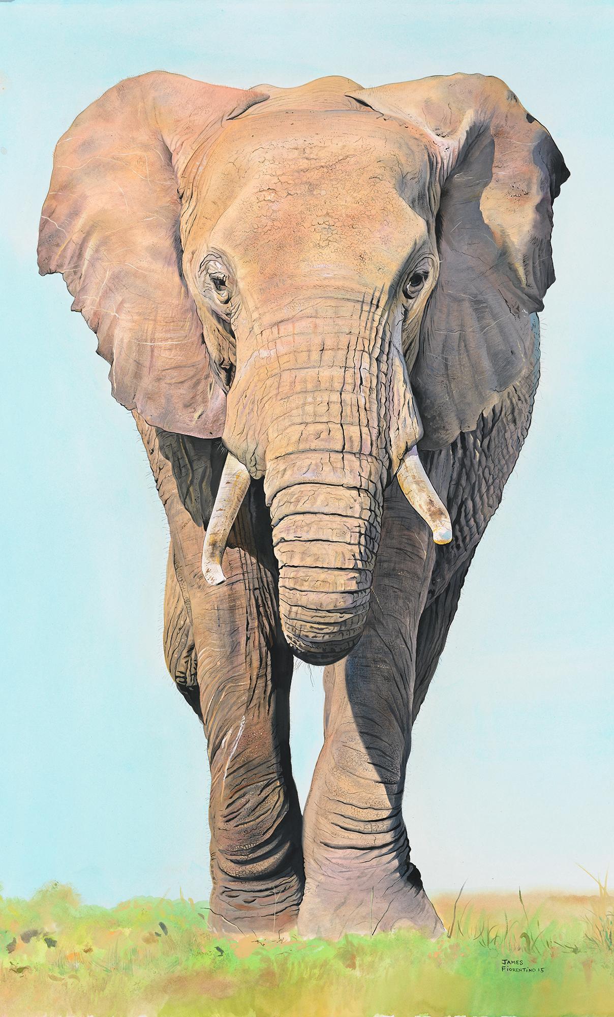 Matriarch African Elephant